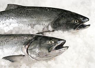 whole-salmon